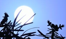 Usine sauvage d'euphorbe sur le grand soleil à l'aube Image libre de droits