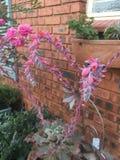 Usine succulente Photos libres de droits