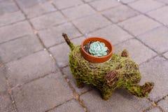 Usine succulente Images stock