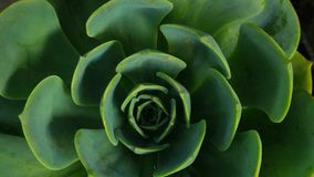Usine succulente Image libre de droits