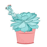 Usine succulente dans l'ornamental d'isolement par pot rustique Photos libres de droits