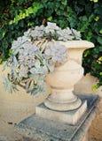 Usine succulente dans un pot de jardin Photographie stock libre de droits