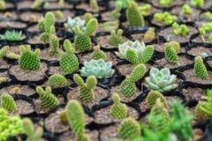 Usine succulente de parterres dans le jardin Photos libres de droits
