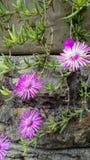 Usine succulente, fleurs, fond photo libre de droits