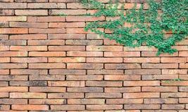 Usine sur la brique d'argile Photo libre de droits