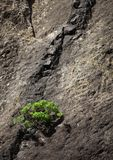 Usine sur la falaise volcanique en vallée de Masca photographie stock
