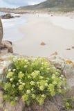 Usine sur la plage de point de Forcados ; Costa de la Muerte ; La Galicie Photo stock