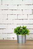 Usine sur la table en bois avec le fond blanc de brique Images stock