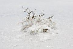 Usine sur un fond de blanc de lac de sel images stock