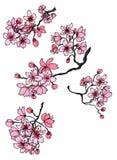 Usine tirée par la main de Sakura Photographie stock libre de droits