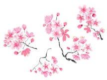 Usine tirée par la main de Sakura Photographie stock