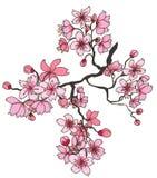 Usine tirée par la main de Sakura Photo libre de droits