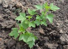 Usine, vert, agriculture, feuille, jardin, nature, jeune plante, légume, sol, croissance, faisant du jardinage, ressort, élevage, Photo stock