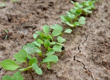 Usine, vert, agriculture, feuille, jardin, nature, jeune plante, légume, sol, croissance, faisant du jardinage, ressort, élevage, Photographie stock libre de droits