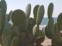 Usine verte de cactus avec le sable et l'océan 4k Image stock