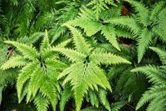 Usine verte de jungle Photographie stock libre de droits