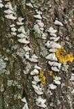 Usine verte de mousse sur l'arbre brun dans la forêt photos stock