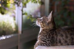 Usines accrochantes de observation de beautigul de chaton dans son ba$lcony image libre de droits