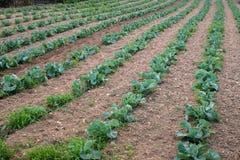Usines agricoles dans les rangées images libres de droits