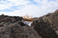 Usines alpines silhouettées contre des nuages image libre de droits