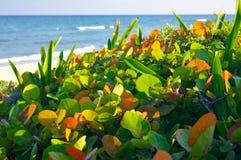 Usines avec des feuilles sur la plage Photos stock