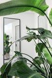 Usines avec les feuilles vertes dans la chambre moderne Photographie stock libre de droits