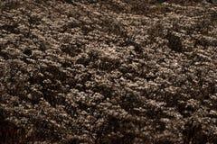 Usines avec une couche mince de neige et de gel photographie stock