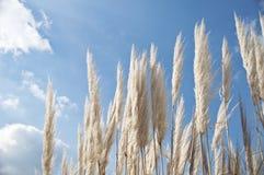 Usines blanches sur le fond de ciel bleu Image stock