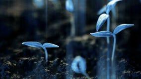 Usines bleues s'élevant, planète futuriste, nouvelle germination de la vie, concept moderne de croissance banque de vidéos