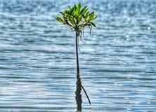 Usines célèbres sri-lankaises de côté de lagune photo libre de droits