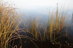 Usines côtières en automne en retard Image libre de droits