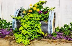 Usines colorées dans le baril de vin coupé Photo stock