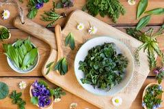 Usines comestibles sauvages de ressort sur une table en bois Photographie stock