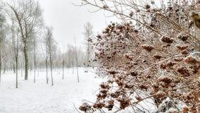 Usines congelées en parc sous la neige images libres de droits