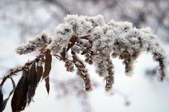 Usines couvertes de neige sèches Images stock