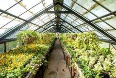 Usines croissantes de woth de maison verte Photographie stock libre de droits