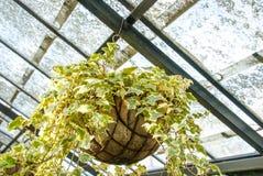 Usines croissantes de woth de maison verte Photos libres de droits