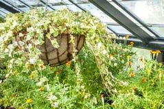Usines croissantes de woth de maison verte Photos stock