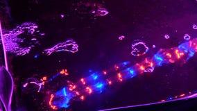 Usines croissantes par aquaponics sous les lampes sp?ciales banque de vidéos