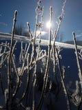 Usines Crystalized en hiver Photos libres de droits