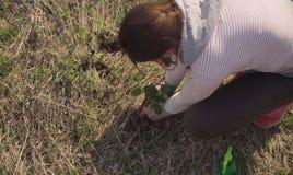 Usines d'activiste de vert de femme un petit arbre photos libres de droits
