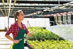 Usines d'arrosage commerciales femelles de jardinier Image stock