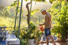 Usines d'arrosage de jeune homme dans le jardin au coucher du soleil images stock