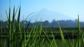 Usines d'herbe à l'arrière-plan d'un volcan image stock