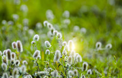 Usines d'herbe Photos libres de droits
