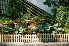 Usines d'herbes s'élevant dans un jardin d'herbes aromatiques Photo libre de droits