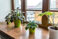 Usines d'intérieur dans des pots sur le rebord de fenêtre Photos libres de droits