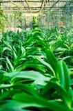 Usines d'orchidée Images stock