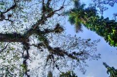 Usines d'orchidée s'élevant sur des branches d'arbre Photos stock