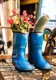 Usines d'un cactus dans le pot de fleurs de botte Photographie stock
